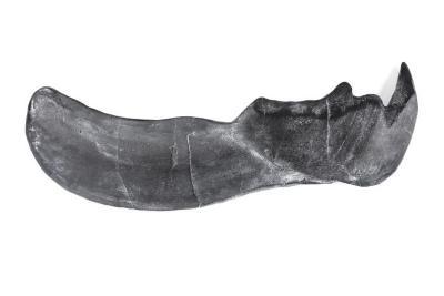 Dunkleosteus terrelli, lower jaw, cast