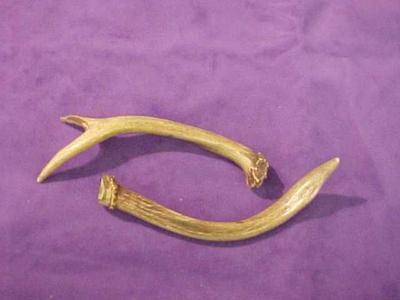 Deer Or Antelope Antlers (2 Pcs.)