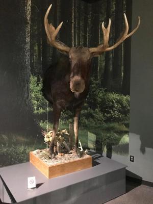 Front Half Moose