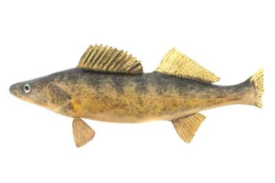 Walleye (Cast)