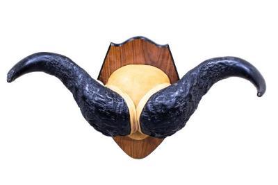 Cape Buffalo (Horn Mount)