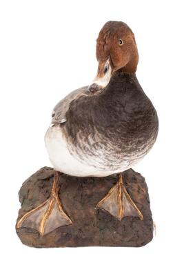 Redhead Duck (mount)