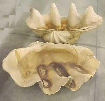 Clam Shell, 2 Sections