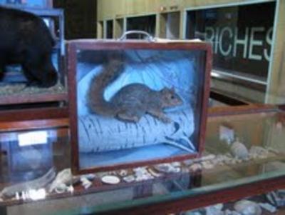 Squirrel, Fox, School Loan Collection