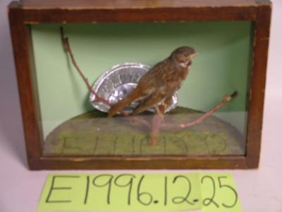 Sparrow, Fox, School Loan Collection
