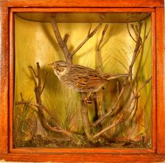 Sparrow, Lincoln's, School Loan Collection