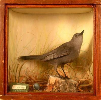 Catbird, School Loan Collection