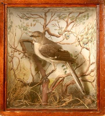 Mockingbird, School Loan Collection