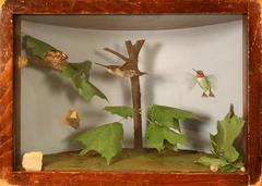 Hummingbird, Ruby-throated, School Loan Collection