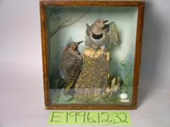 Flicker, School Loan Collection