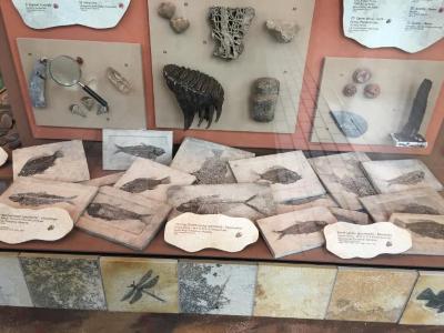 Fossil, Fish Perch Priscacara