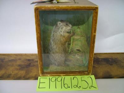 Woodchuck, School Loan Collection