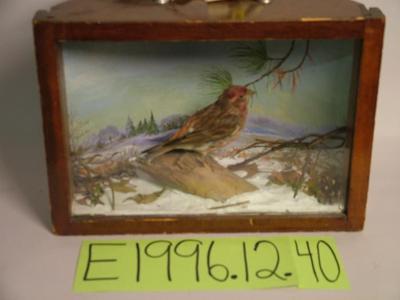 Finch, Purple, School Loan Collection
