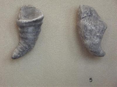Fossil, Horn Coral Zaphrentis Torta, 2
