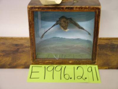 Bat, Brown, School Loan Collection