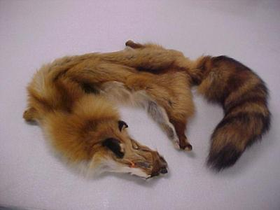 Fox, Red Pelt Vulpes Fulva